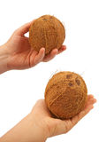 Coconuts in his hand. Stock Images