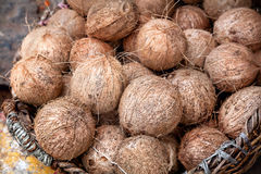Coconuts at Indian market Royalty Free Stock Image