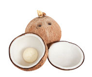 Coconuts isolated Royalty Free Stock Photography