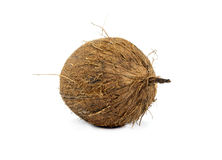 Coconuts isolated Royalty Free Stock Photo