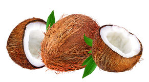 Coconuts isolated on white Stock Image