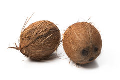 Coconuts isolated on white. Background Royalty Free Stock Image