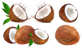 Coconuts isolated on white Stock Photos