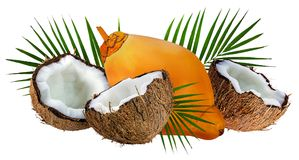 Coconuts isolated on white Royalty Free Stock Photography