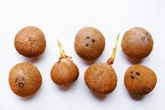 Coconuts isolated on the white background. Top view Stock Image