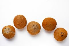 Coconuts isolated on the white background. Top view Stock Photos