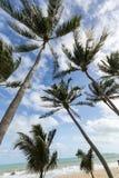 Coconuts landscape Stock Images