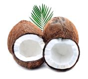 Coconuts with leaves. Coconuts with leaves on a white background Royalty Free Stock Images