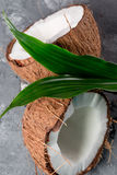 Coconuts with leaves on the grey stone background Royalty Free Stock Photo