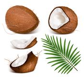 Coconuts with leaves. Royalty Free Stock Photo