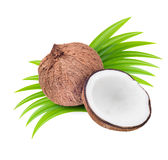 Coconuts with leaves stock image