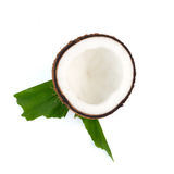Coconuts with leaves on white background. Coconuts with leaves on a white background Royalty Free Stock Photo