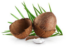 Coconuts with leaves on a white background. Close up Stock Images