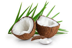 Coconuts with leaves on a white background. Stock Image