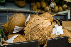 Coconuts on the loose layout Stock Photography