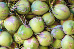 Coconuts in the market Royalty Free Stock Photo