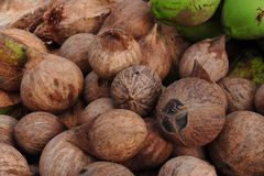 Coconuts on market Royalty Free Stock Photo