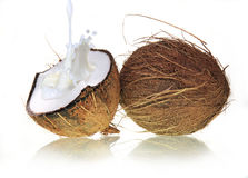 Coconuts with milk splash Stock Photography