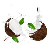 Coconuts with milk splash Stock Images