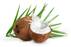 Coconuts with milk splash and leaf on white background. Close up Stock Images