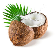 Coconuts with milk splash and leaf on white background Stock Images