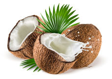Coconuts with milk splash and leaf on white background. Coconuts with milk splash and leaf isolated on white background Royalty Free Stock Photo