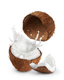Coconuts with milk splash on white background. Royalty Free Stock Photo