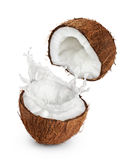 Coconuts with milk splash on white background. Stock Image
