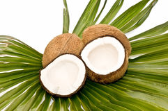 Coconuts and palm Stock Photos