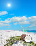 Coconuts and palm branches under the sun Royalty Free Stock Image