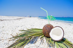 Coconuts and palm branches on white pebbles Royalty Free Stock Photos
