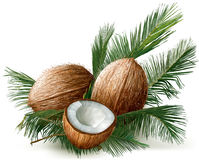 Coconuts on a palm leaves Royalty Free Stock Images
