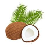 Coconuts with palm leaves. Whole and cracked. isolated on the white background. realistic 3d Stock Photo