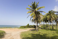 Coconuts palm tree and a beautiful or skyline. Natal south coastline, RN, Brazil Stock Images