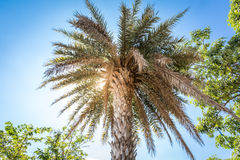 Coconuts palm tree perspective view from floor high up Stock Photos