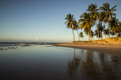 Coconuts palm tree - sunset - Natal, Brazil. A peaceful beach on North coast of Rio Grande do Norte, Brazil Royalty Free Stock Photo