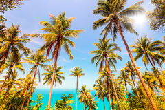 Coconuts palm trees and sea Stock Images