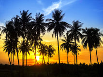 Coconuts palm trees on sun set. Silhouette of coconut palm trees on colorful sun set Royalty Free Stock Images