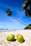 Coconuts at paradise beach Stock Photo