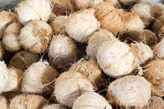 Coconuts peeled Stock Images