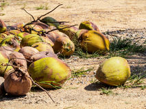 Coconuts pile. On the floor Stock Images