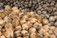 Coconuts. Pile of coconuts.Coconuts pile.Coconut in the Food Industry Stock Photos