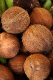 Coconuts! Stock Images