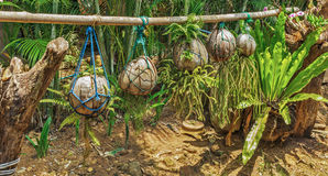 Coconuts on a plantation. Decoration Stock Images