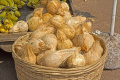 Coconuts for puja Royalty Free Stock Photography