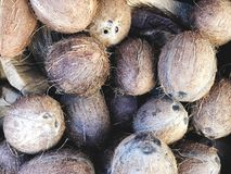 Coconuts for sale on market. Group of small whole fresh brown. Agriculture background. Close-up. Top view. Coconuts for sale on market. Group of small whole Royalty Free Stock Photos