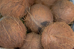Coconuts for sale on market. Group of small whole fresh brown. Agriculture background. Top view. Close-up Royalty Free Stock Photos