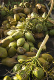 Coconuts for sale at Maui`s Farmer`s Market Royalty Free Stock Image