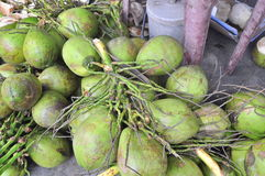 Coconuts for sale to travellers on a treet vendor in Vietnam Stock Photography
