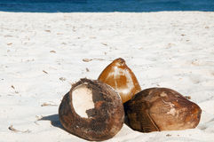 Coconuts on sand. Still Life - coconuts on a tropical white sand beach Stock Images